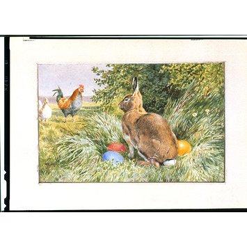 rabbit v & a