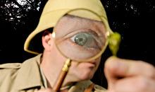 Ugly Bug Safari