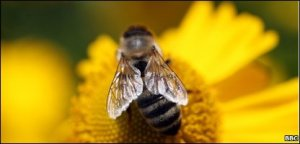 bees science
