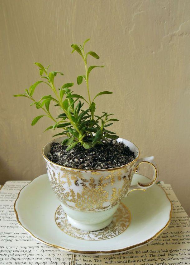 tea cup garden