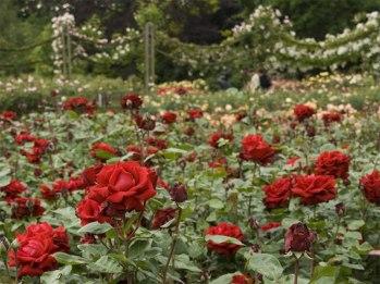 the-queen-marys-gardens