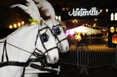 horse-665x442