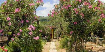 Alegria, Provence, France